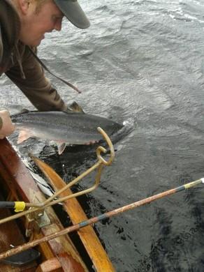Returned fish