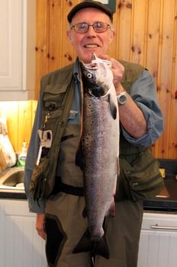 Ross salmon