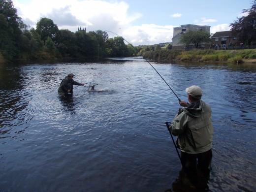 electrofishing 005